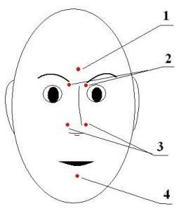 расположение БАТ на лице